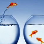 migration-fish.png